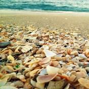 Shells Beach II