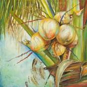 Patricia's Coconuts II