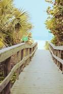 Palm Walkway II