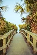 Palm Walkway I