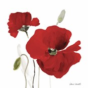 All Red Poppies I