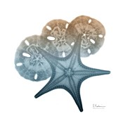 Steel Hues Starfish and Sand Dollar
