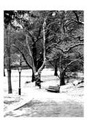 Central Park Snowy Scene