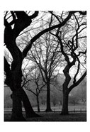 Central Park Dancing Trees
