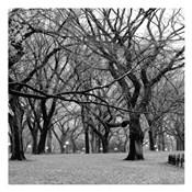 Central Park 2B