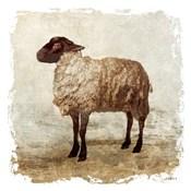 Rustic Sheep