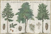 Woodland Chart I