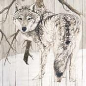 Wolf in Woods on Barn Board