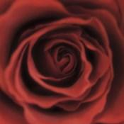 Red Rose Square
