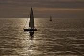 Sailboats Copper