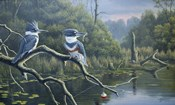 Fisherman's Luck, Belted Kingfishers