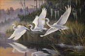 Morning Departure Egrets