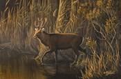 Evening Rounds Sika Deer