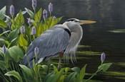 Biding Time Great Blue Heron
