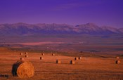 Hay Bales with Mountains