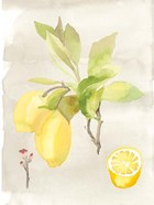 Watercolor Fruit II