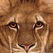 Eyes of the Lion