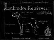 Blueprint Labrador Retriever
