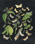 Butterfly Bouquet on Black III