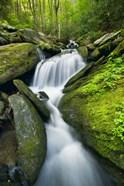 Mossy Rocks on Cascade