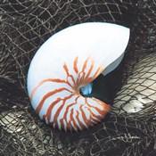 Nautilus with Net