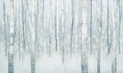 Birches in Winter Blue Gray
