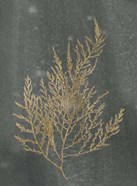 Gold Foil Algae II on Black - Metallic Foil
