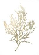 Gold Foil Algae III - Metallic Foil
