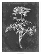 Slate Floral II