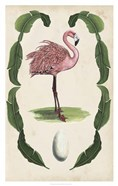Antiquarian Menagerie - Flamingo I