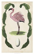 Antiquarian Menagerie - Flamingo II