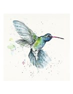 Hummingbird Flurry
