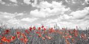 Poppies in Corn Field, Bavaria, Germany