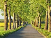 Lime Tree Alley, Mecklenburg Lake District, Germany 1