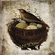 Nest & Eggs