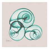 Shamrock Sky Snails