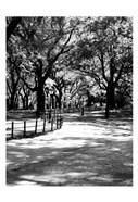 Central Park Walk 2