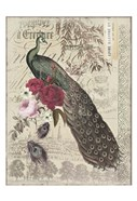 New Peacock 1