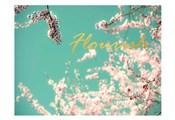 Flourish Apple Sky