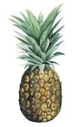 Watercolor Pineapple II