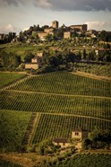 Tuscany Vineyard 02