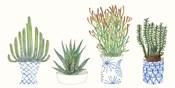 Four Succulents I