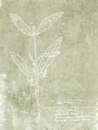 Essential Botanicals IV