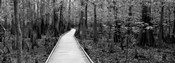 Boardwalk passing through a forest, Congaree National Park, South Carolina