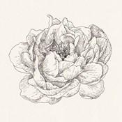 Pen and Ink Florals V