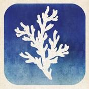 Watermark Coral