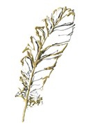 Gilded Turkey Feather I