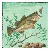 Trout Eating