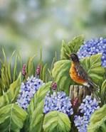 Robin With Hydrangeas