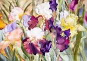 Iris Garden I